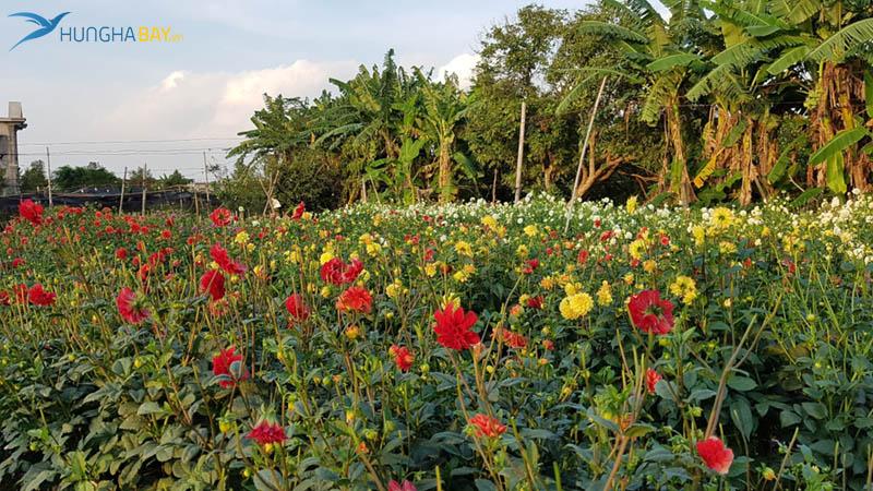 Làng vườn Bách Thuận huyện Vũ Thư, tỉnh Thái Bình