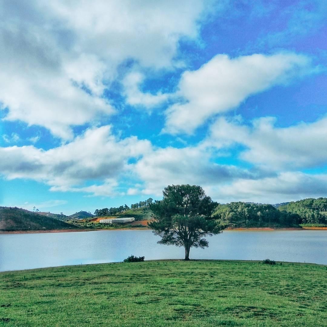 Du lịch Đà Lạt – vivu với gốc cây cô đơn